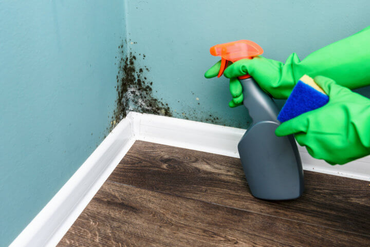 Spray Bottle And Sponge Near Black Mould Wall